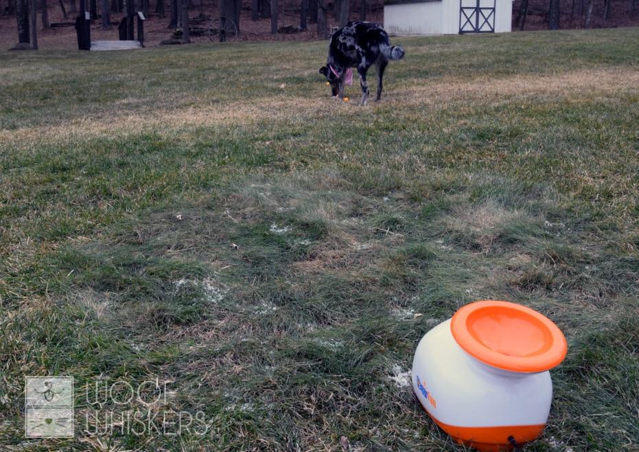 doggyfun field test