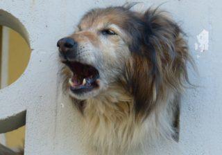 best dog bark collar