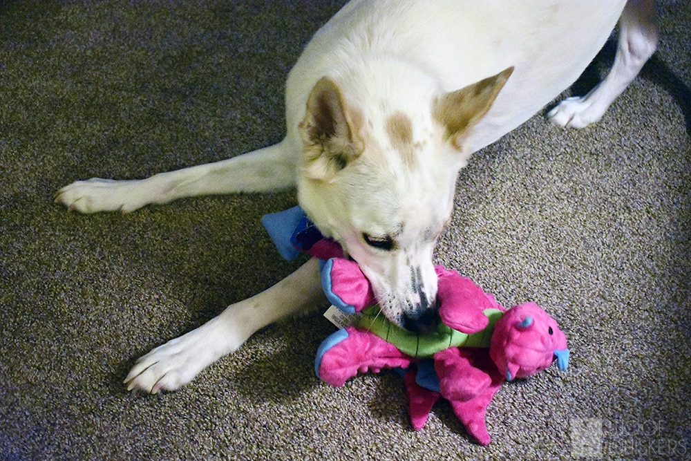 sasha dragon dog toy
