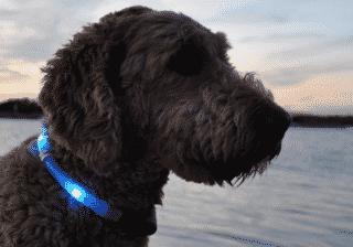 best-dog-glow-dark-collar-leash