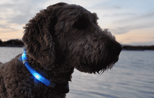 best-dog-glow-dark-collar-leash