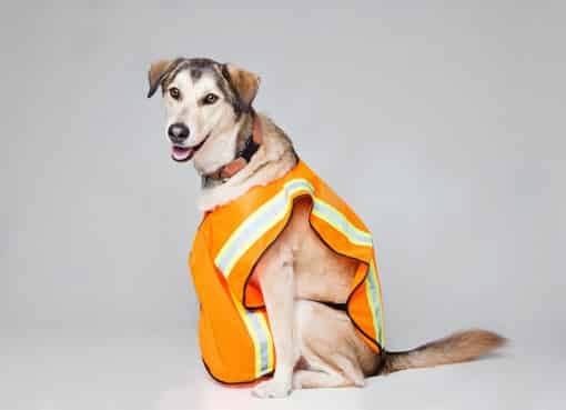 dog safety gear