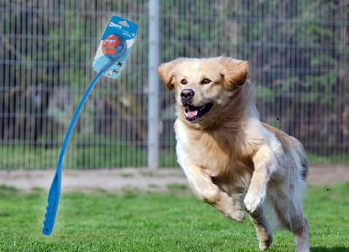 best dog exercise toys