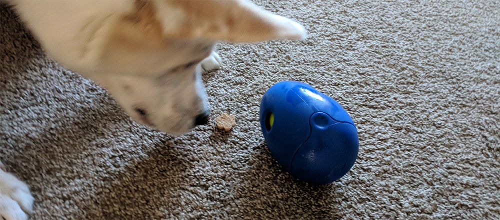 best dog puzzle toy