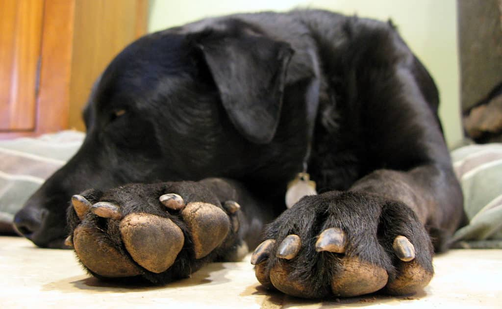 Best Dog Paw Washers Simple Ways To Clean Muddy Paws