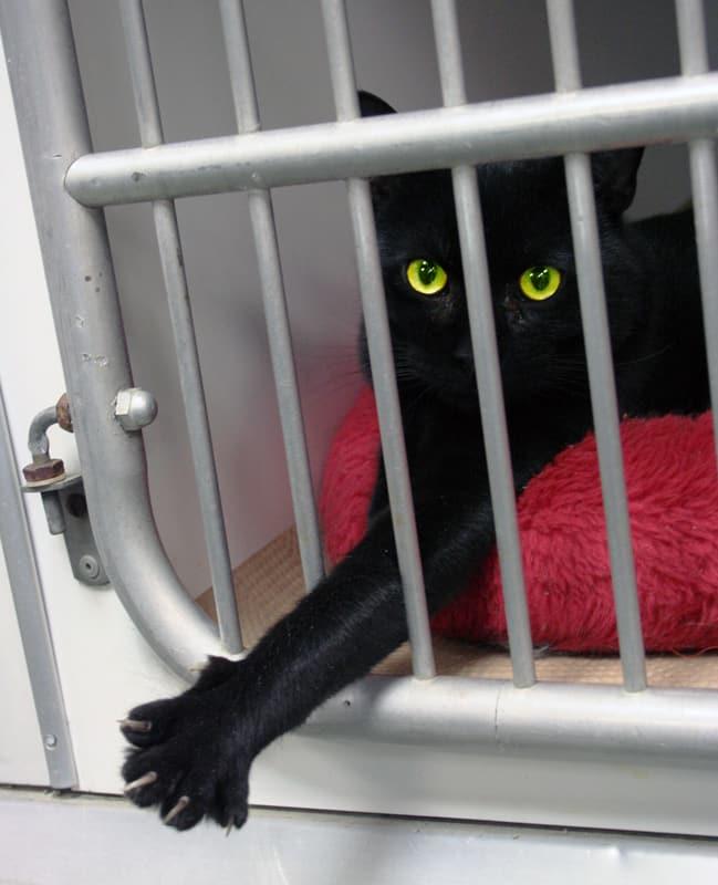 pet shelter cat charity