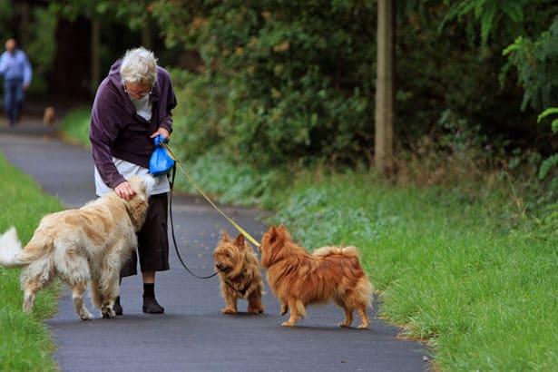 walking dogs charity