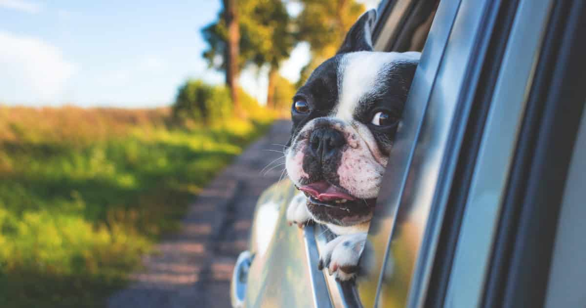best dog car accessories road trip