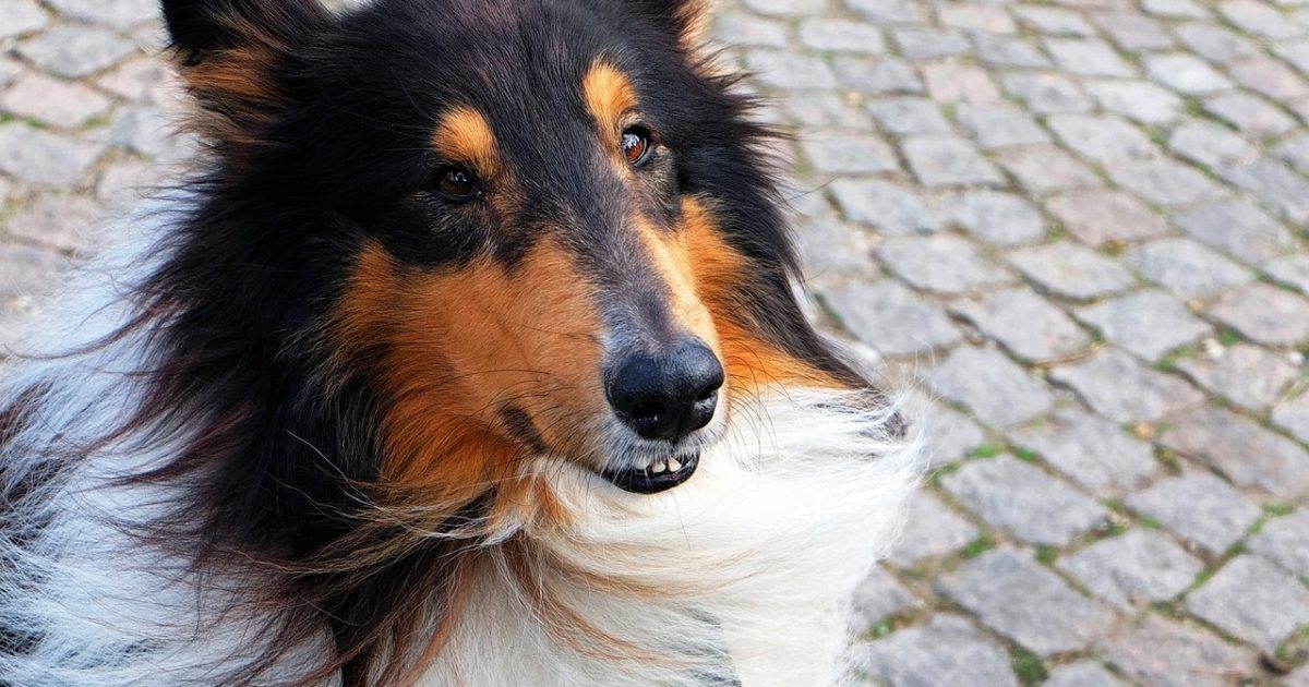 Best Dog Food For Inactive Dogs