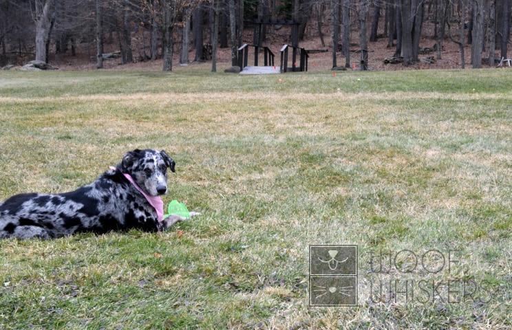 max paleidimo priemonės diskų apžvalgos šuo
