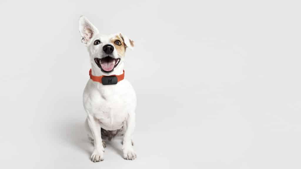 Nuzzle on a dog