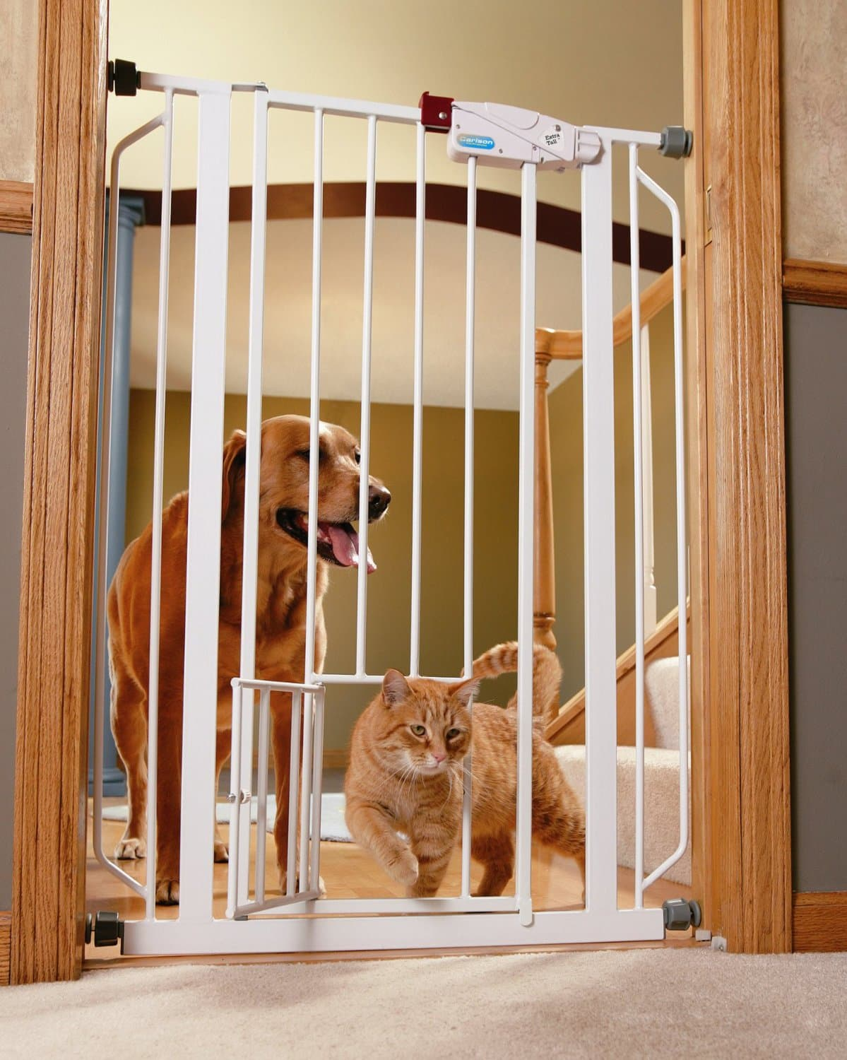 guide to best dog gates