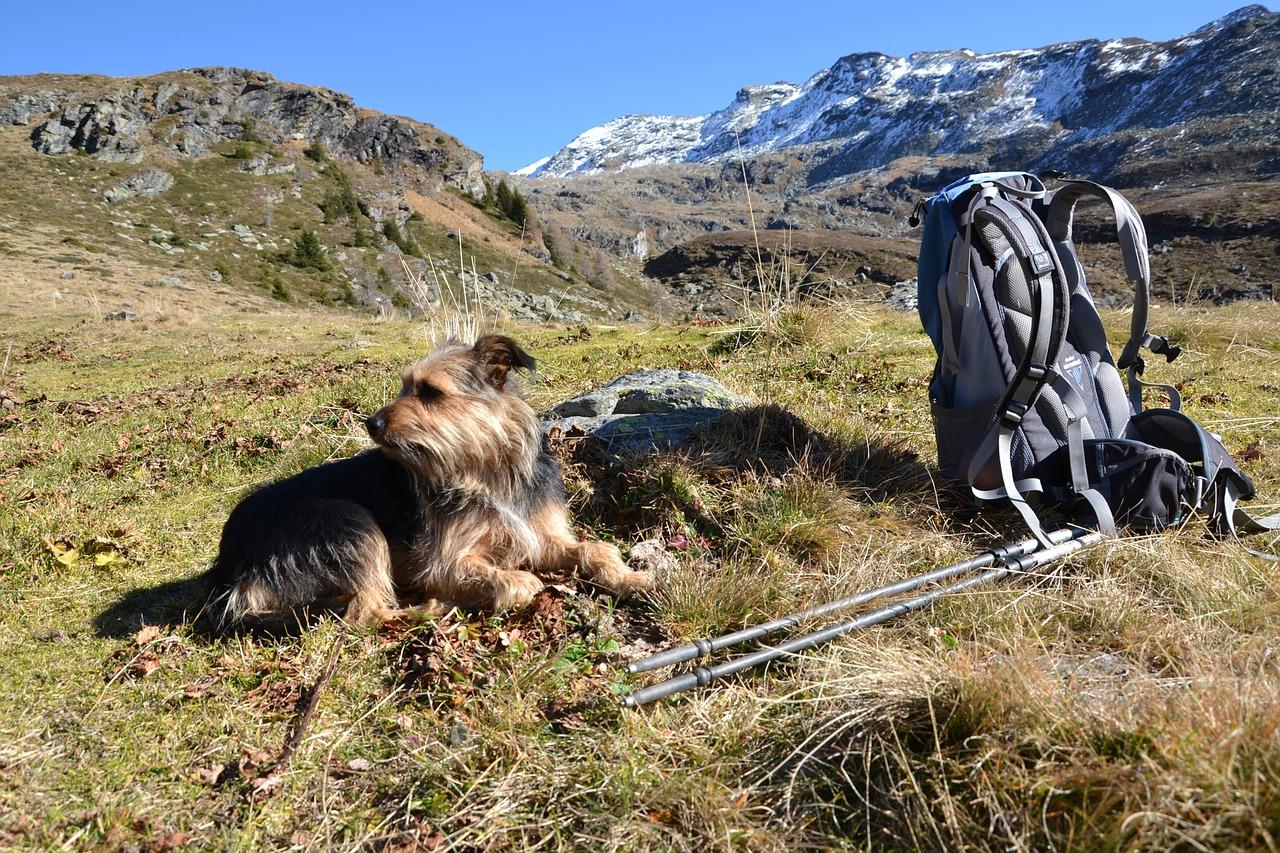 active dog hiking