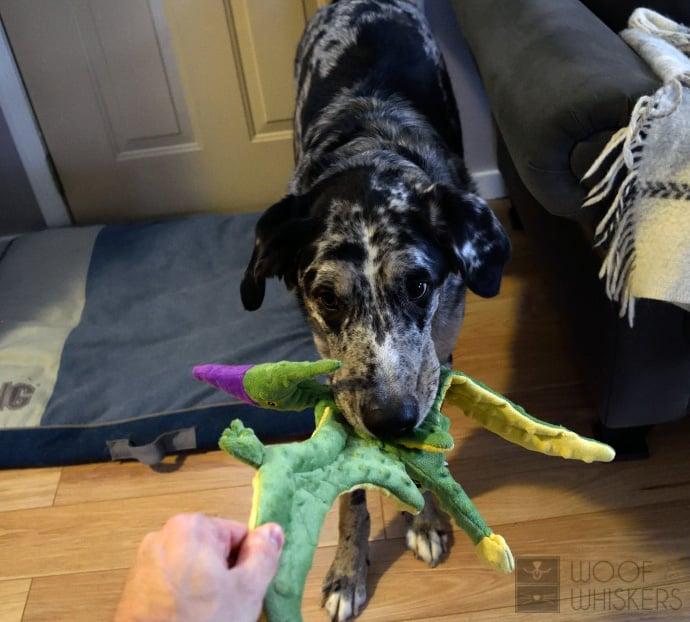 kartofelis žaidžia su dino žaisliuku
