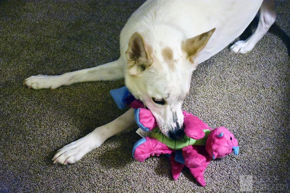 sasha dragon dog toy