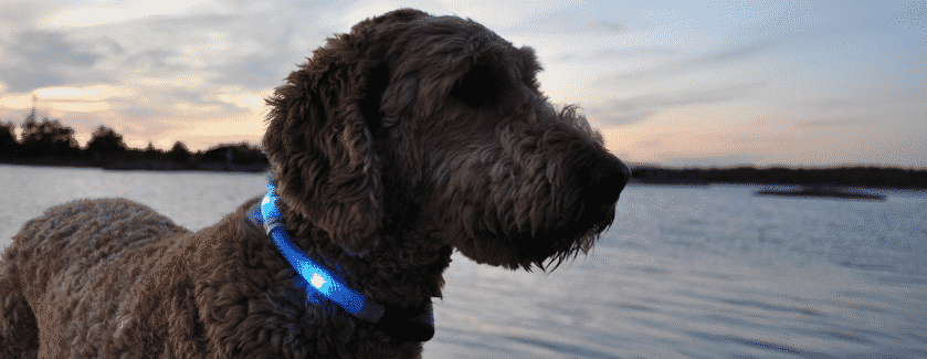 Best Light Up Collar For Dogs