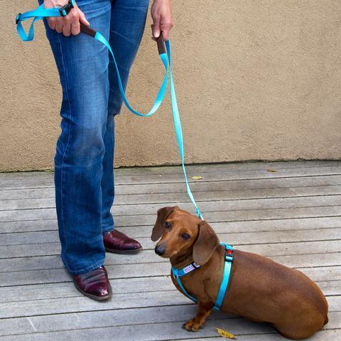 walk in sync small dog