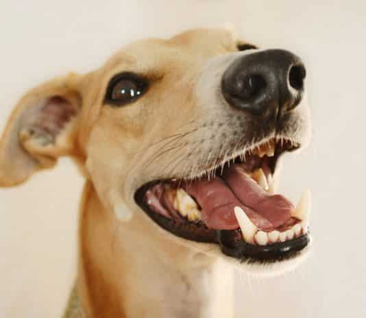 best products for cleaning dog teeth
