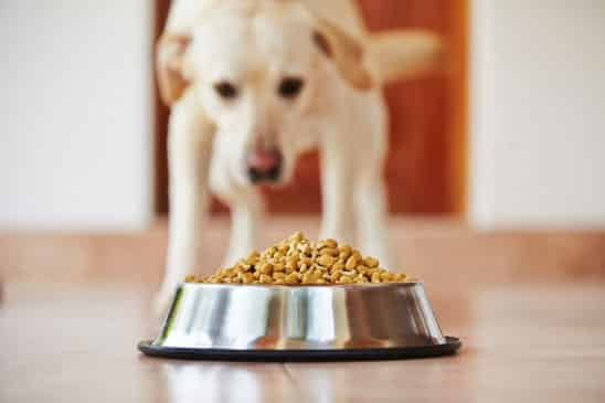 dog-eating-dry-food