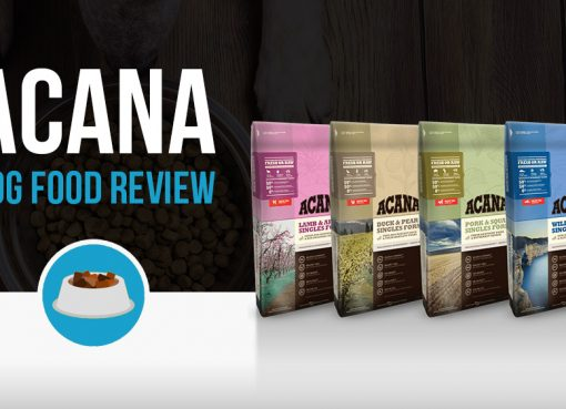 ACANA dry dog food review