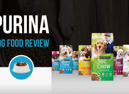 Purina Dog Food Review