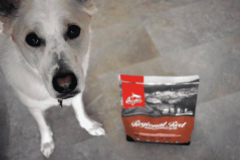 Our dog Sasha with Orijen dog food