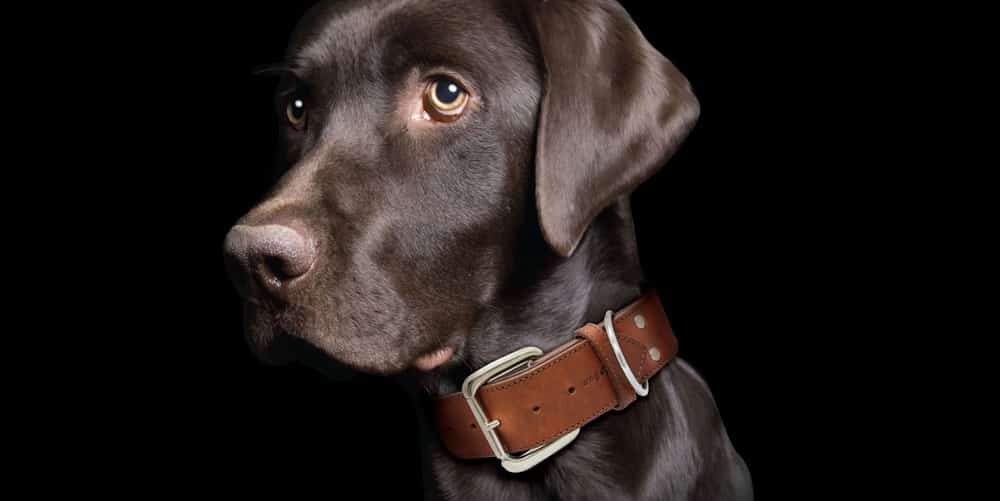 Angel Pet Supplies leather collar