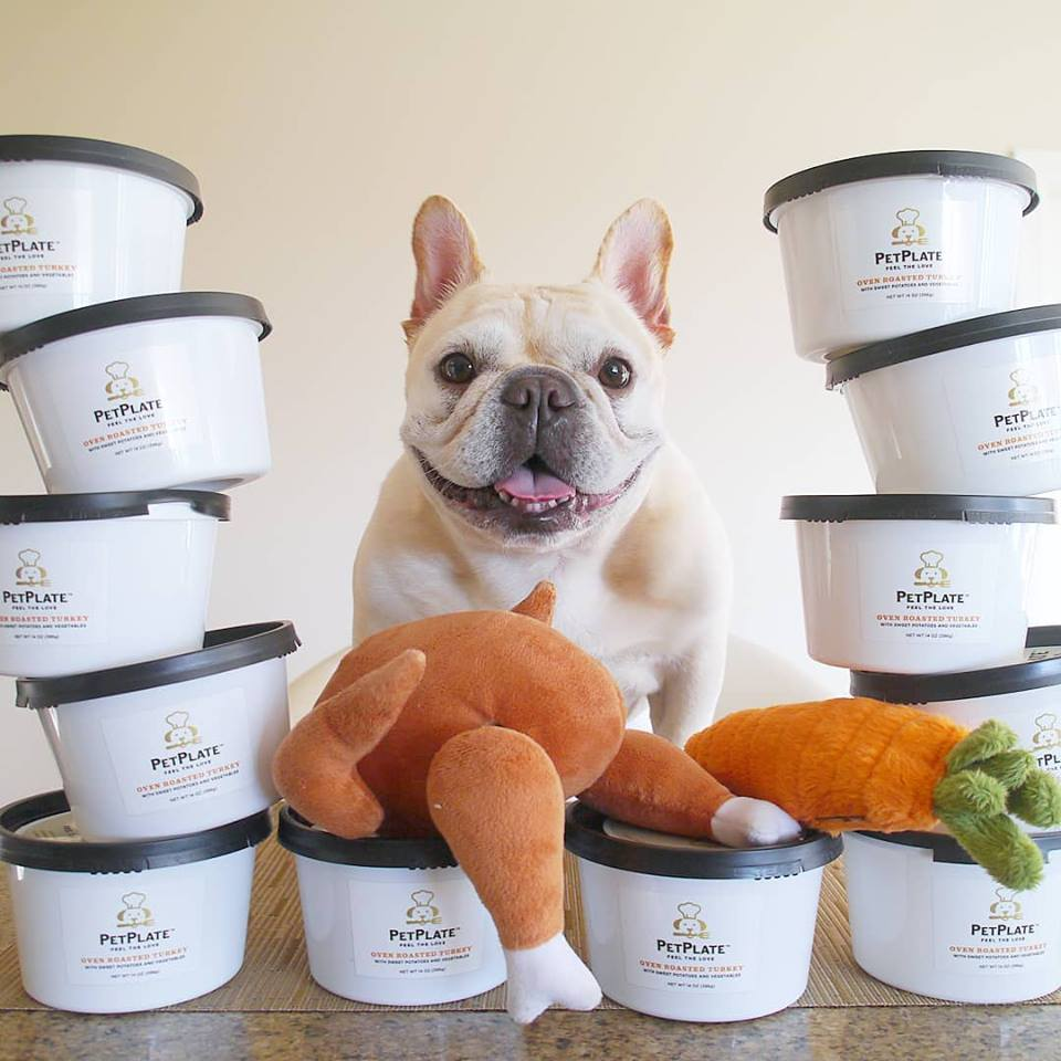 dog with PetPlate meals
