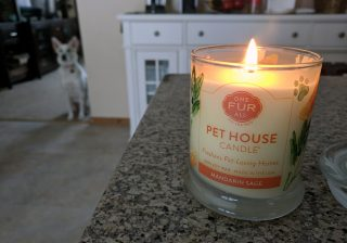 soy candle pet odor