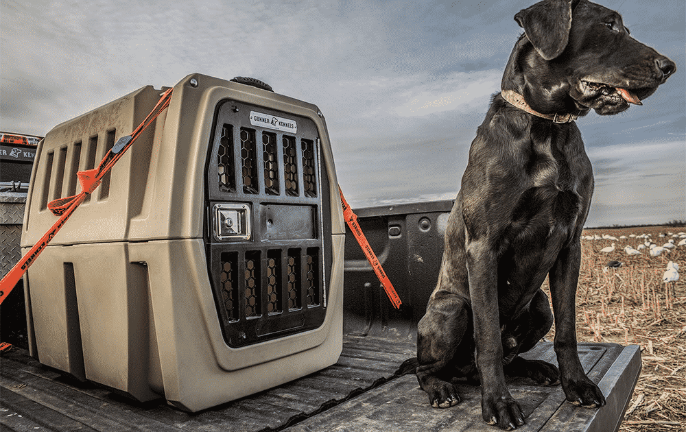 best dog crates and kennels