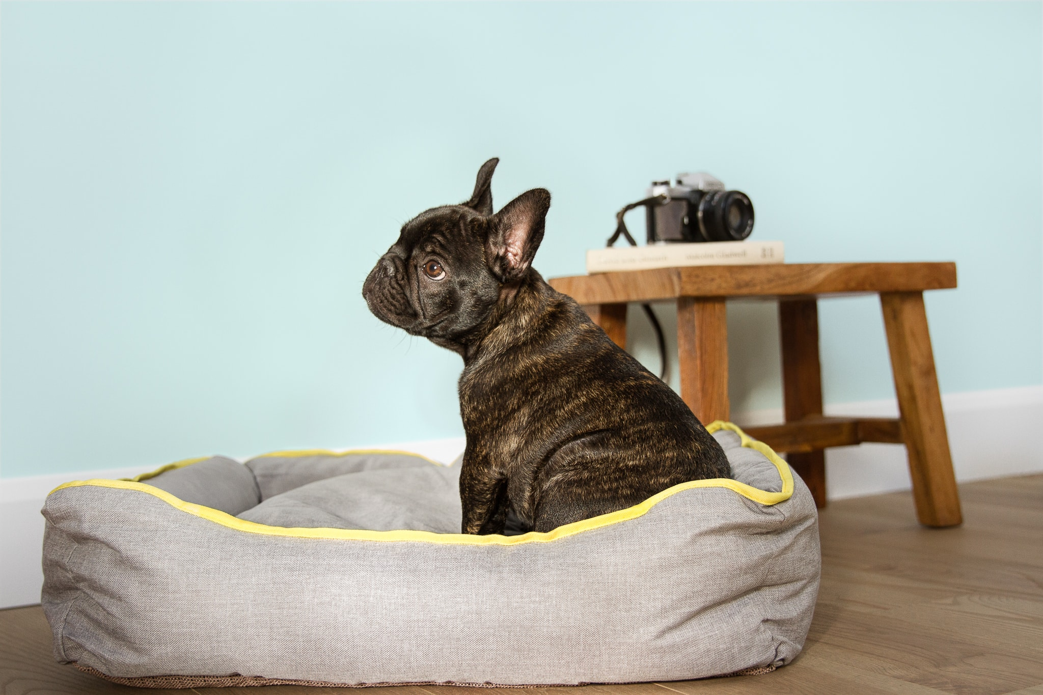 Creative design dog beds