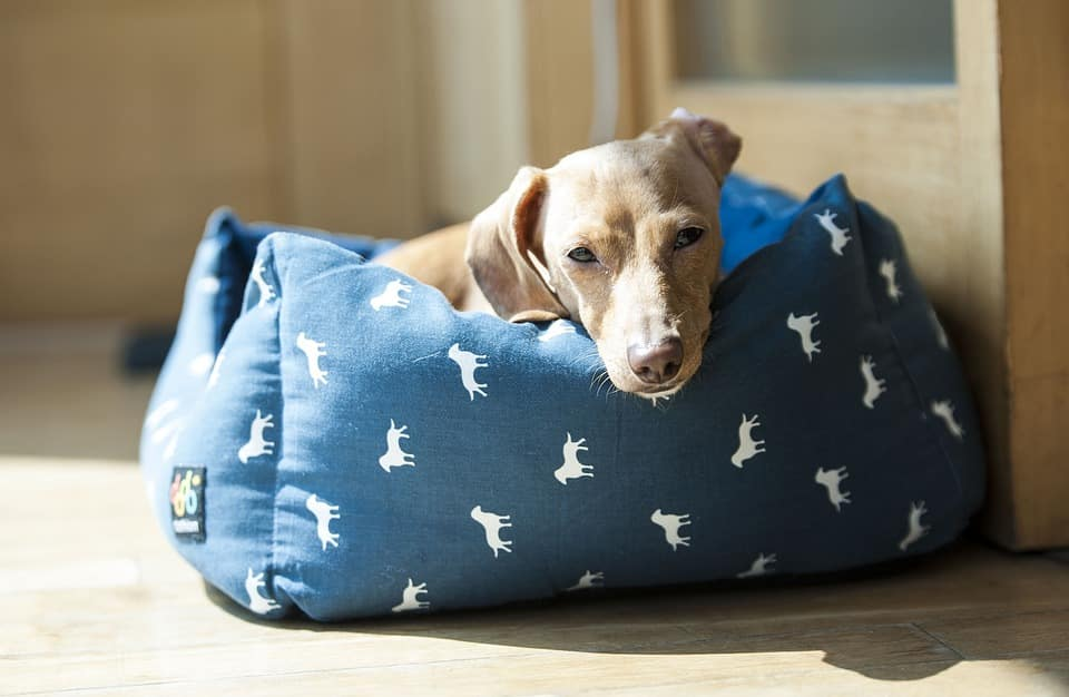 Best Dog Bed reviews