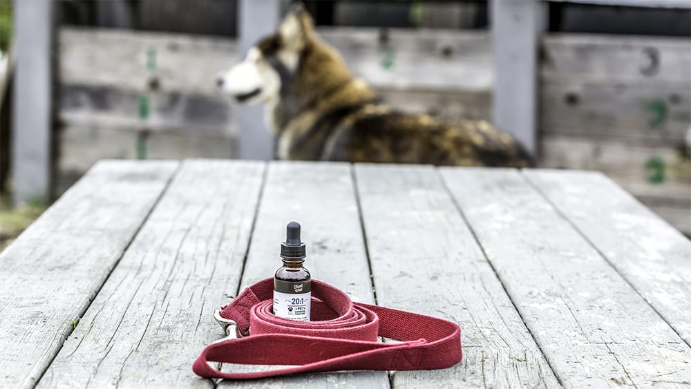 CBD Oils for Dogs