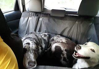remove-dog-hair-from-car