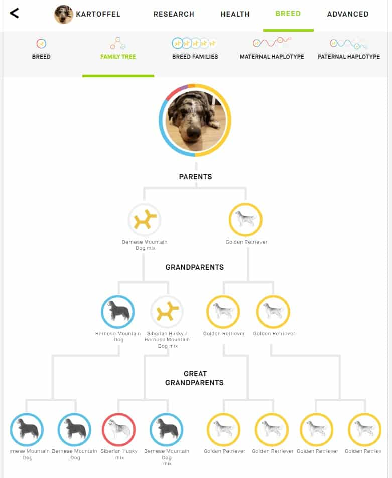 embark breed tree