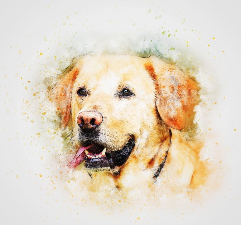 best custom dog portrait painting