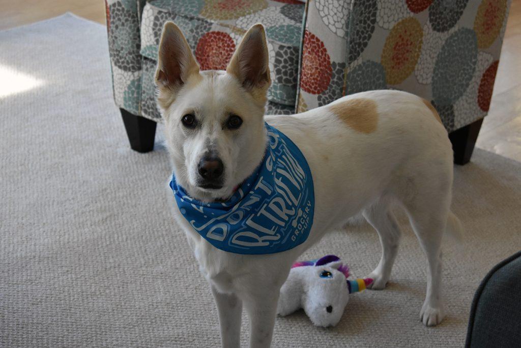 Sasha in bandana