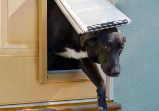 best dog door feature