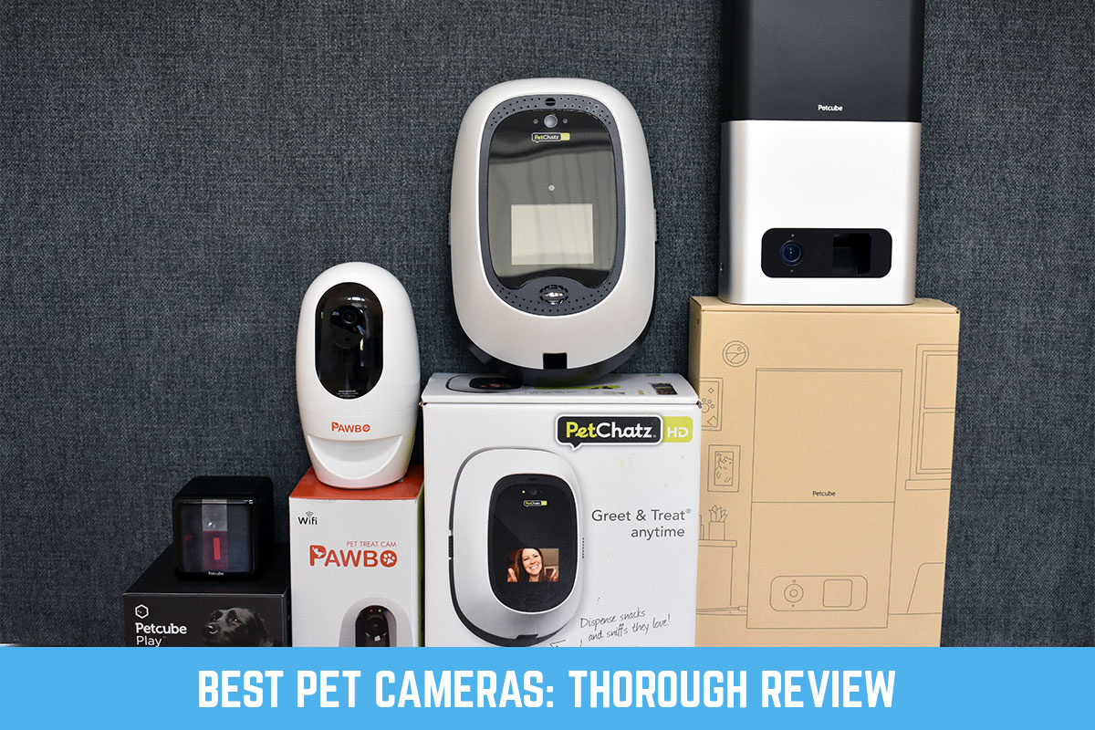 Review of the best pet cameras