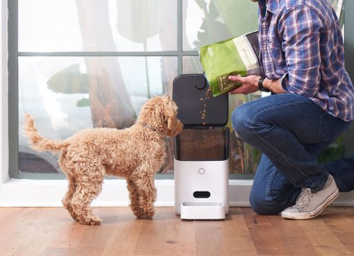 best dog smart feeder guide