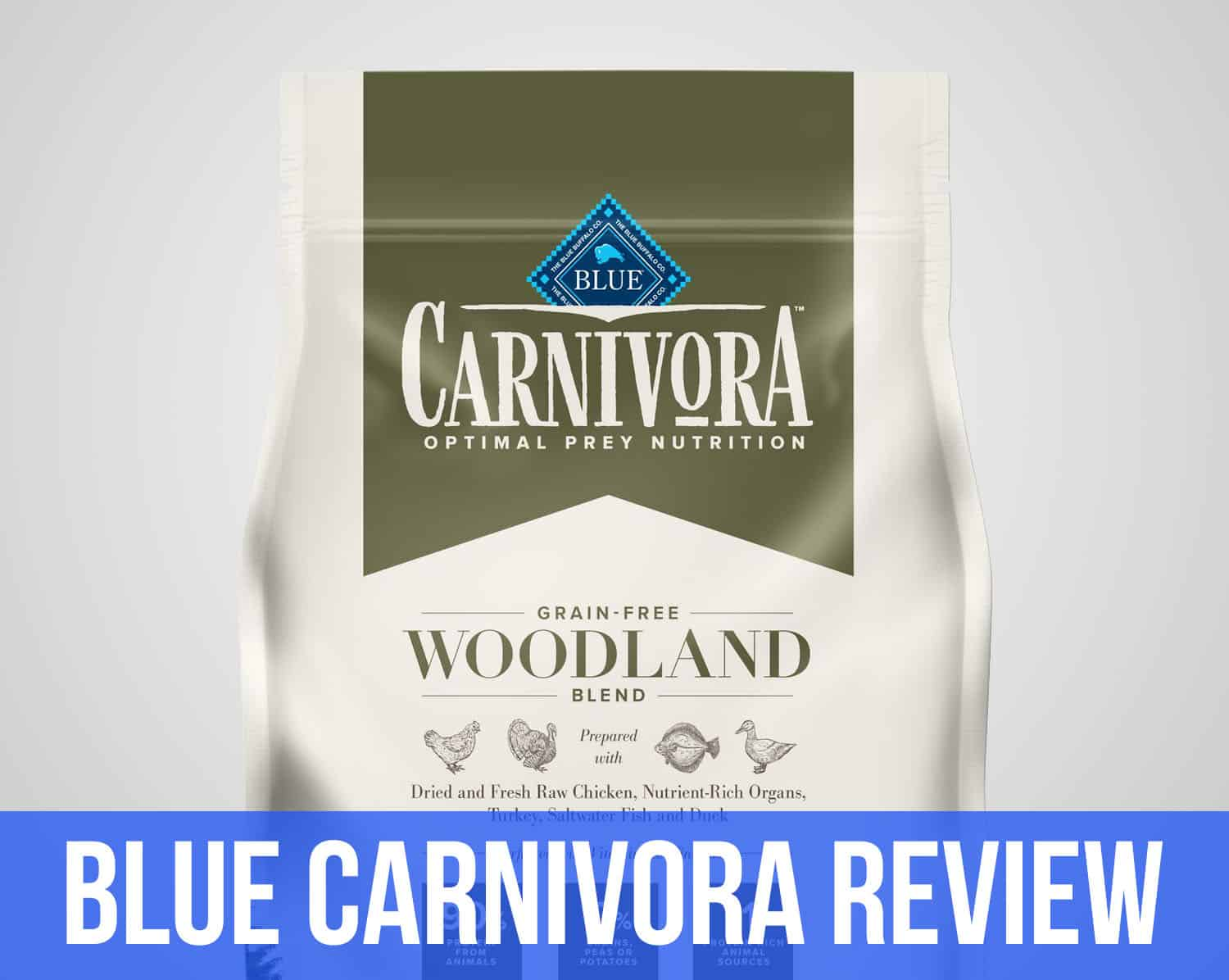 blue carnivora review feature image