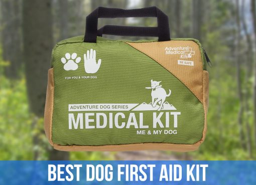 best dog first aid kit