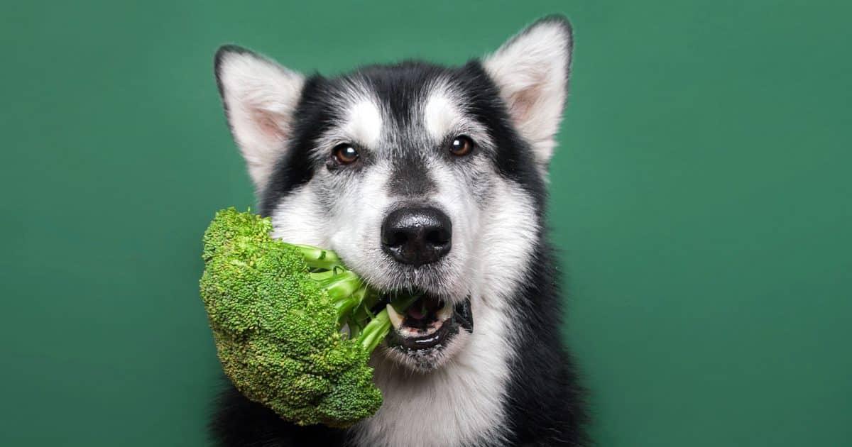 best vegan dog food