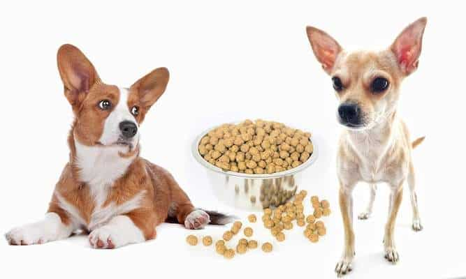 Wild Earth Dog Food Review Vegan Perfection? - Woof Whiskers