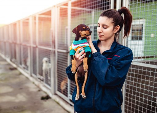 animal shelters covid survey