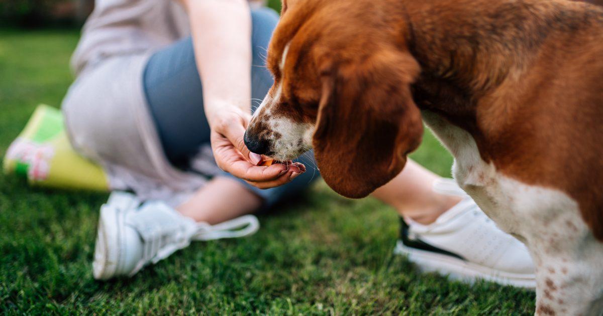 EVO Dog Food