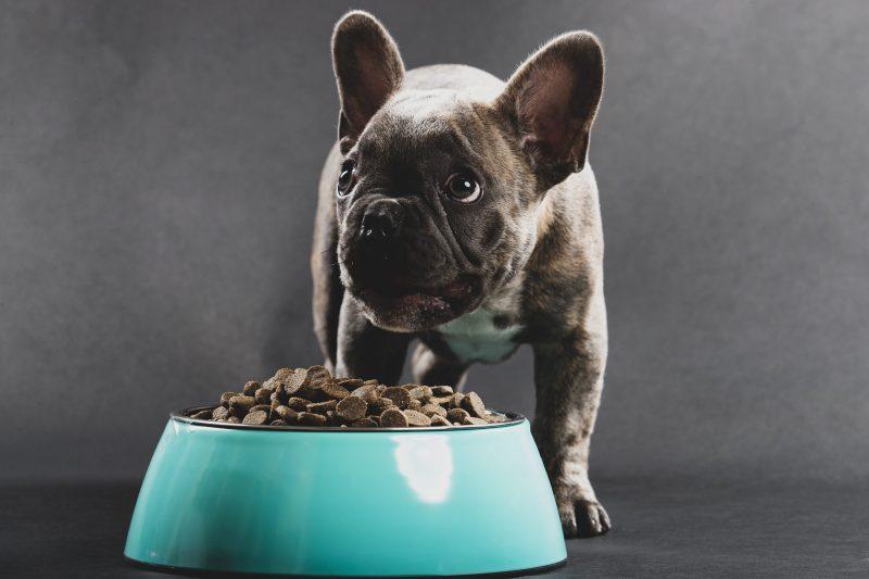 Blackwood Pet Food Review
