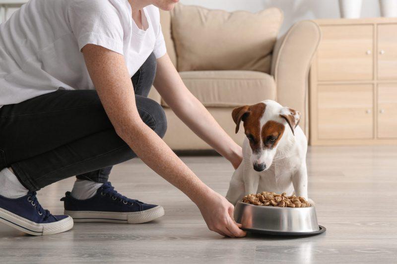 black-gold-premium-pet-food-review