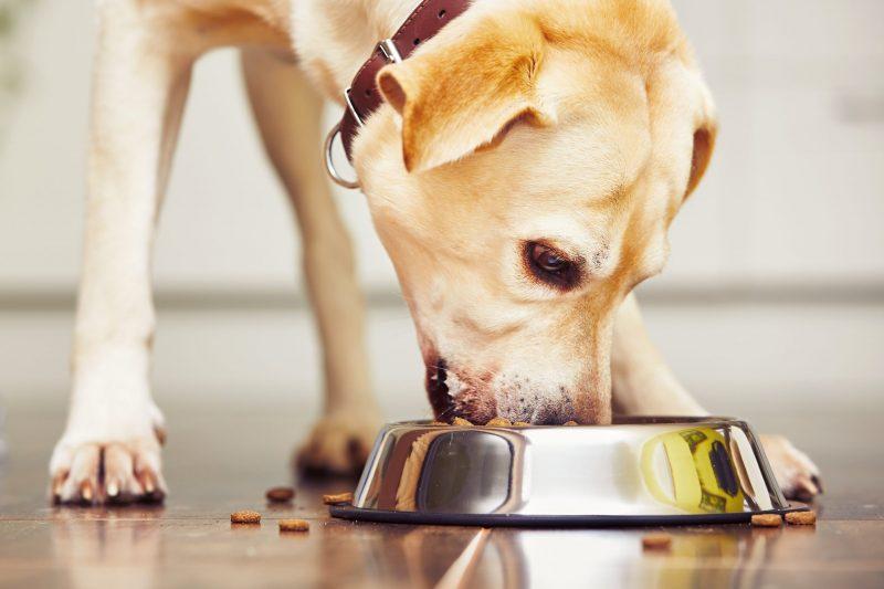 Canine Caviar Dog Food