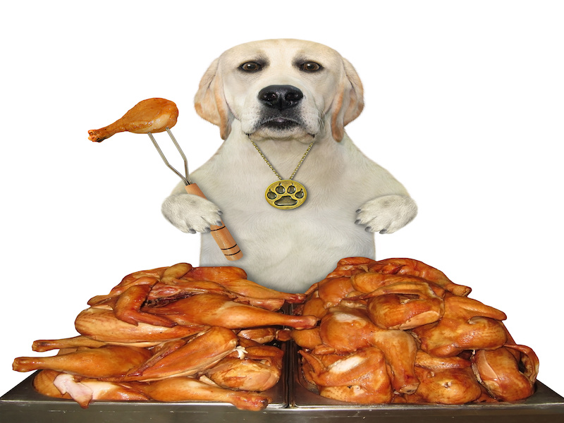 can dogs eat fried chicken